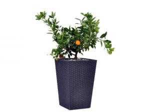 Rattan Planter L 144,8L